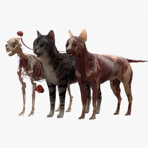 rigged fur 3D model