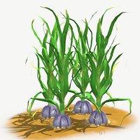3dsmax garlic planting