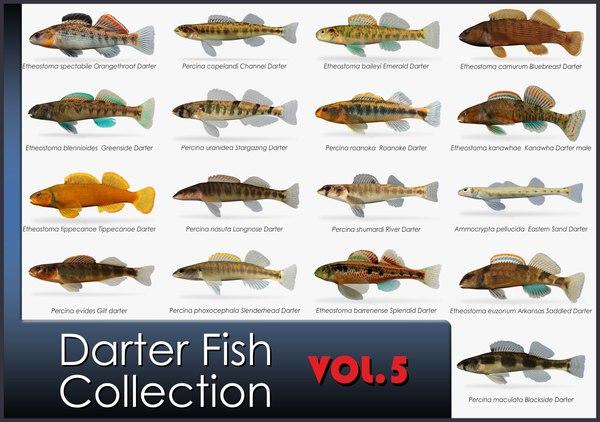 Darter 3D Models for Download | TurboSquid