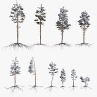 Winter Pine Tree Pack vol.01