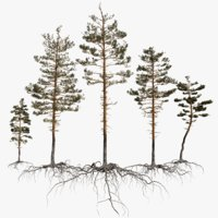 pine tree pack vol 3D