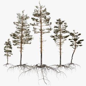 pine tree pack vol 3D