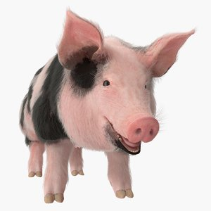 3D model pig sow peitrain rigged