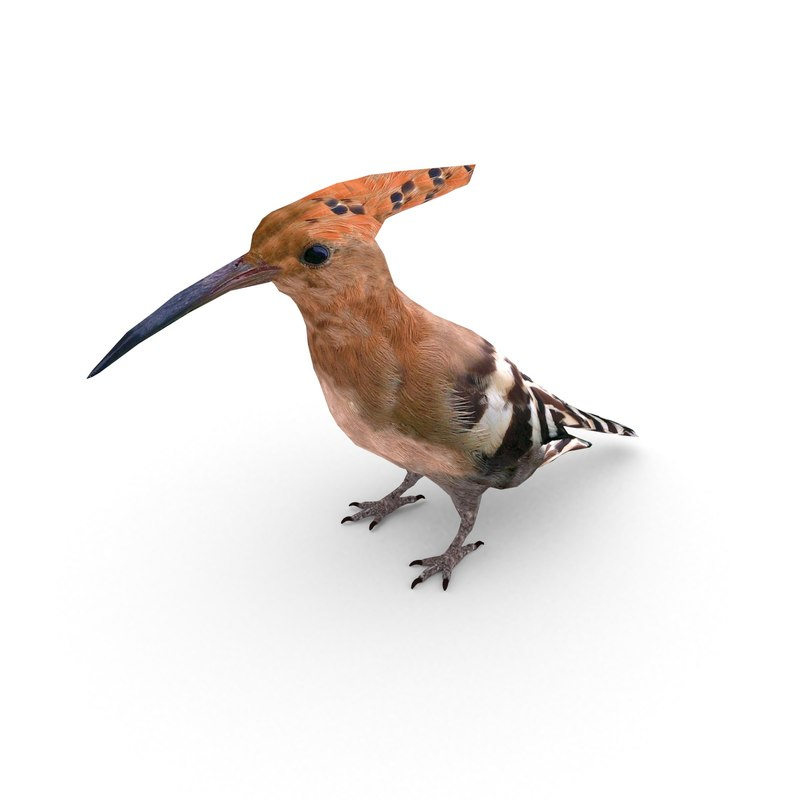eurasian hoopoe 3D model