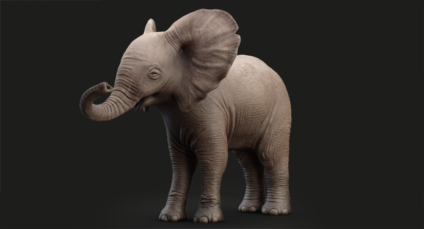 elephant baby rigging animation 3D model