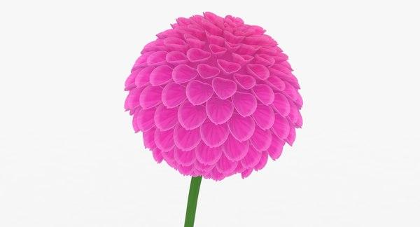 3D dahlia pink model
