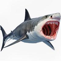 3D great shark white