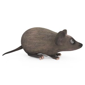 3D rat mouse animal model