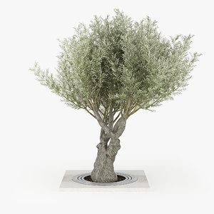 olea europaea 3D model