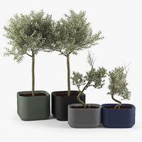Urbilis Olive