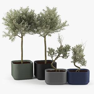 olive 3D