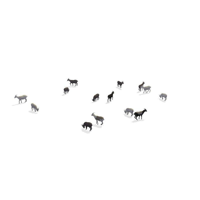 group herd goats walking 3D model