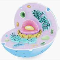 3D cell animal