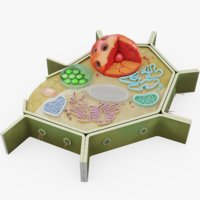 3D model plant cell