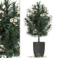 nerium oleander 3D model