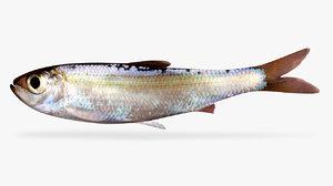 alewife fish 3D model