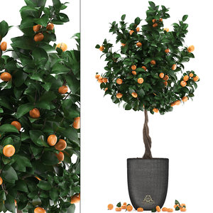 3D mandarin tree fruit