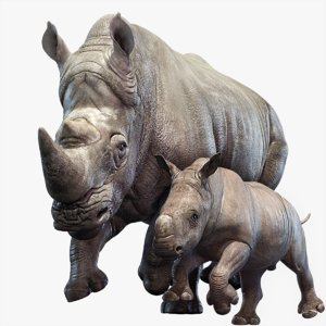 rhino rigged baby 3D