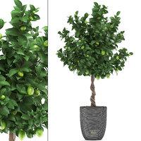 3D model lime tree lemon fruit