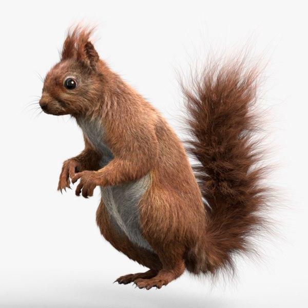 squirrel 3D model