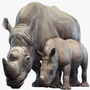 rhino family rigged model