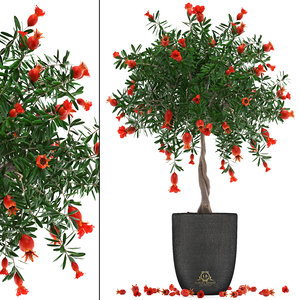 3D model pomegranate tree fruit