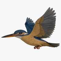 rigged common kingfisher 3D
