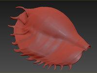 3D realistic lambis truncata shell