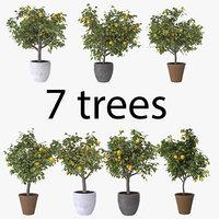 lemon trees pack model