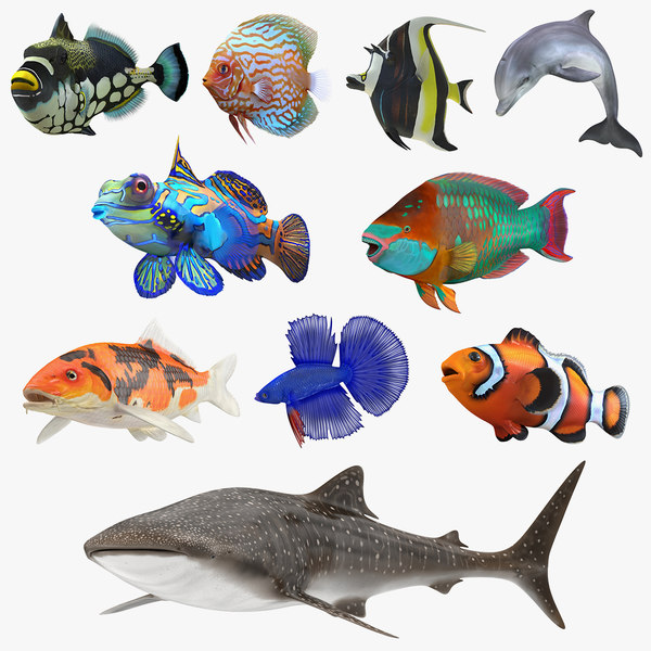 fishes 4 3D model