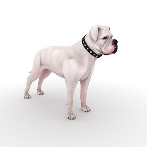 american bulldog collar 3D model