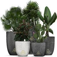 3D exotic plants model