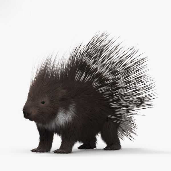porcupine mammal animal 3D model
