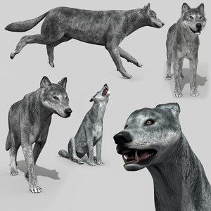 wolfgang wolf animation - 3D model
