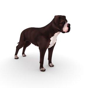 3D american bulldog