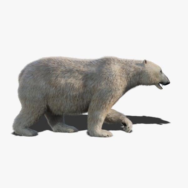 3D model polar bear fur animation rig