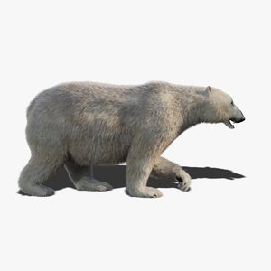 3D model polar bear fur animation rig