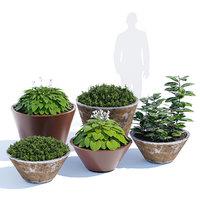 pitocca planter 3D