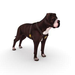 3D american bulldog harness model
