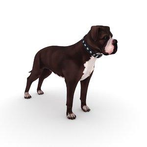 3D american bulldog collar