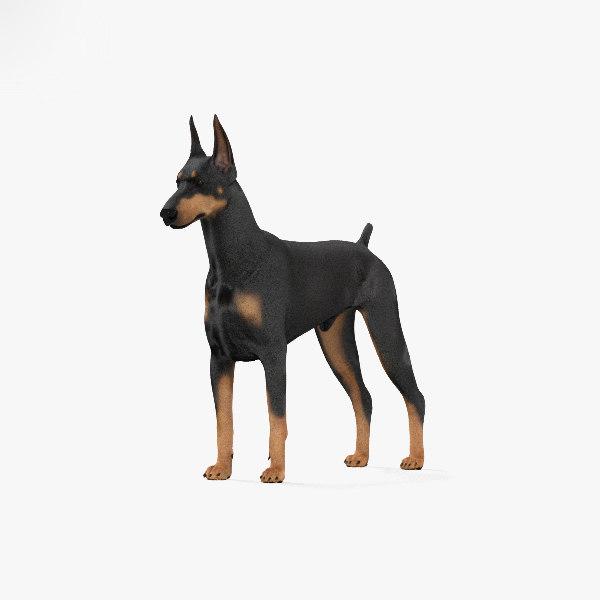 doberman pinscher 3D model