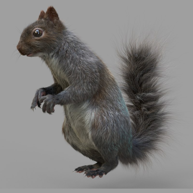3D squirrel nature rodent