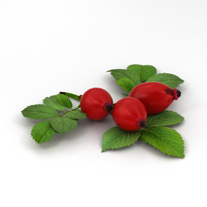 rose hip 3D