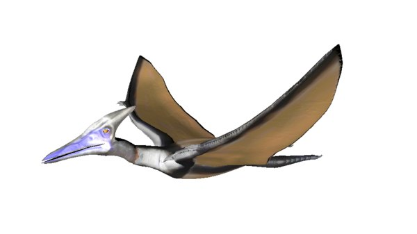 pterousaur dinosour 3D model