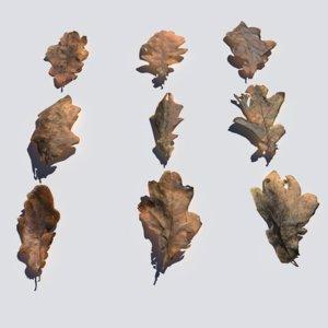 3D model dry oak leaves pack