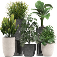 Collection of exotic plants in pots 10