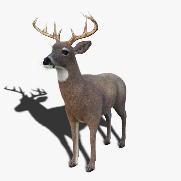 white tailed deer 3 3D model