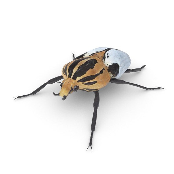 goliath beetles insects 3D model