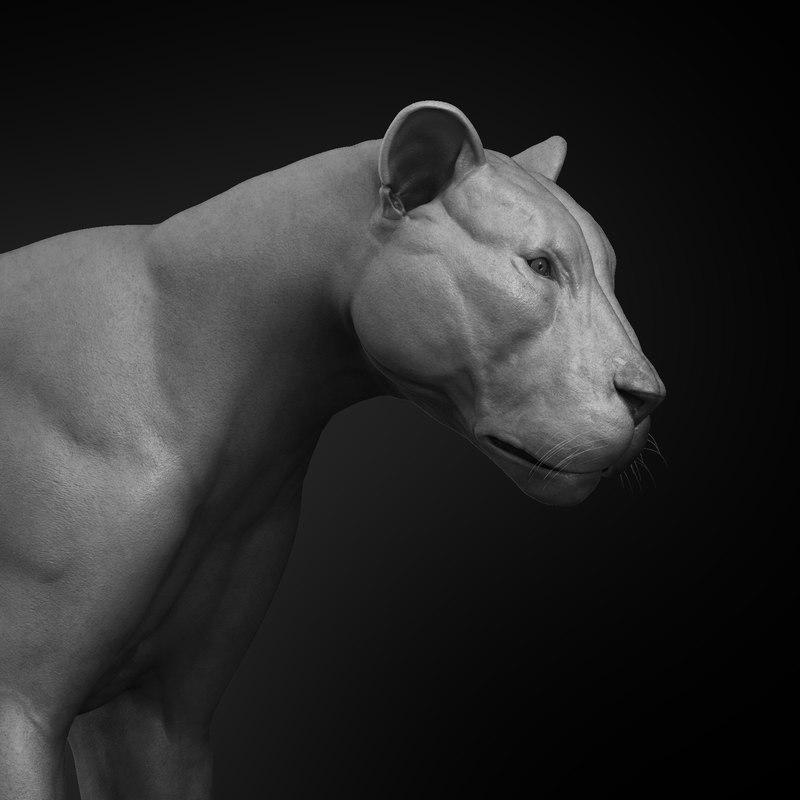 3D lion anatomy animal body character