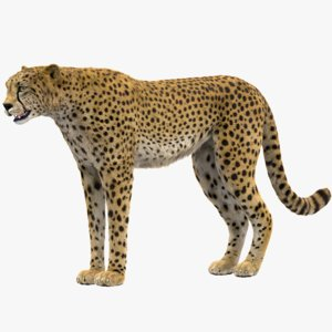 3D model cheetah rigged fur